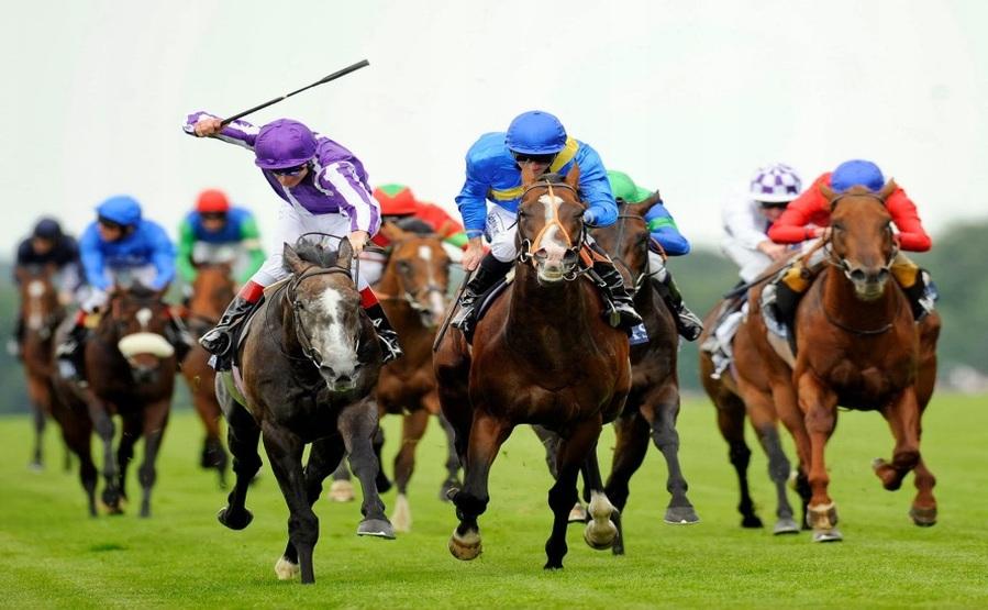 Obstawianie wyścigów konnych na zakładach